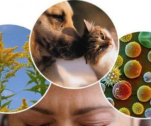 Аллергия дыхательных путей или аллергические кожные высыпания
